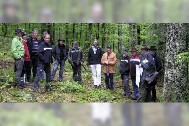 Bernauer Wald ist rundum gesund und bringt was ein