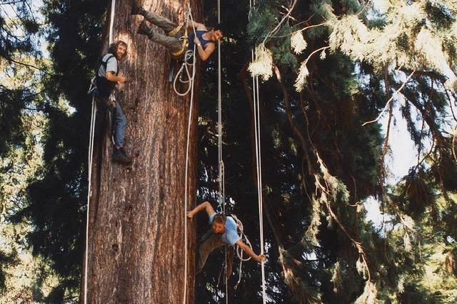 Was macht ein Baumkletterer – und was ist Baumchirurgie?