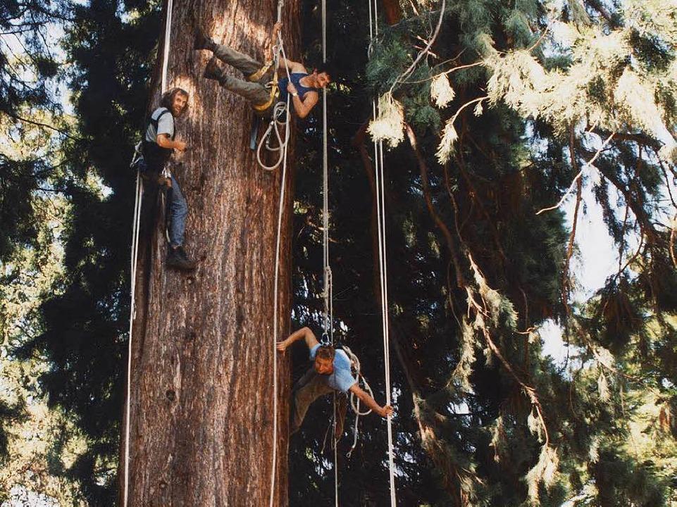 Dave Mac Intyre (links) und Ulrich Pfe...rsten Mitarbeitern an einem Mammutbaum    Foto: Volker Münch