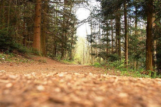 Urlauberin verfährt sich und bleibt mit Auto im Wald stecken