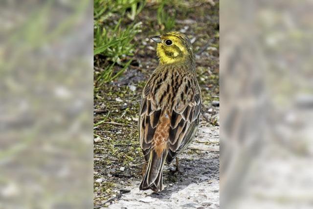 Kleiner Vogel mit großer Wirkung