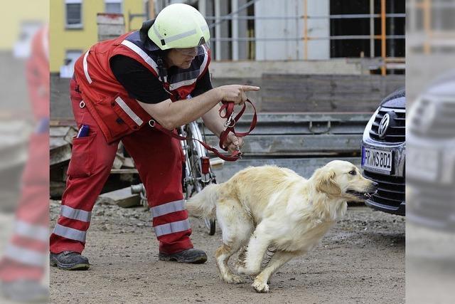 Die Rettungshunde der Freiburger Staffel trainieren bei Wind und Wetter für den Ernstfall