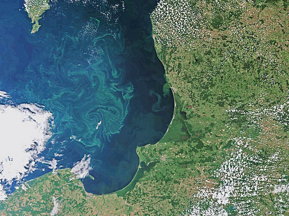 Eine Algenblüte vor dem Danziger Becken in der Ostsee   | Foto: ESA/AFP