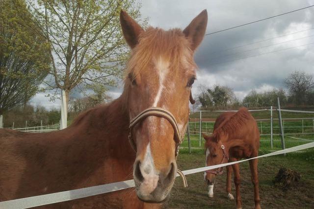 Hund schreckt Pferd auf: Zwei Menschen stürzen von einer Kutsche und verletzen sich schwer