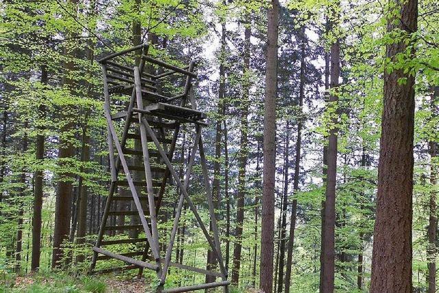 Serientäter im Wald? Erneut sind Hochsitze zerstört