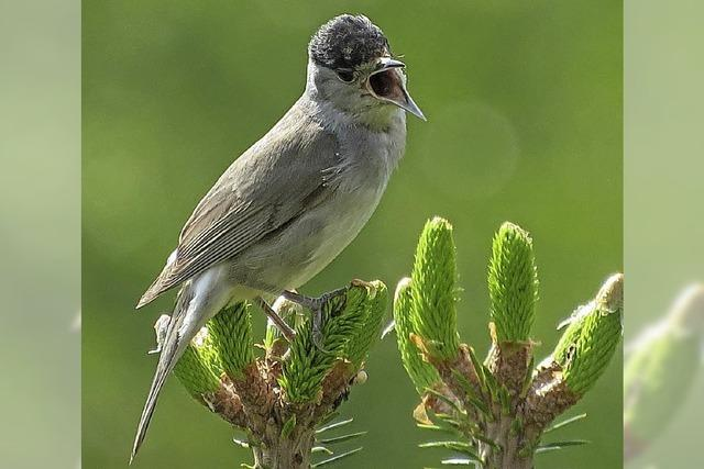 Vögel singen auch im Regen