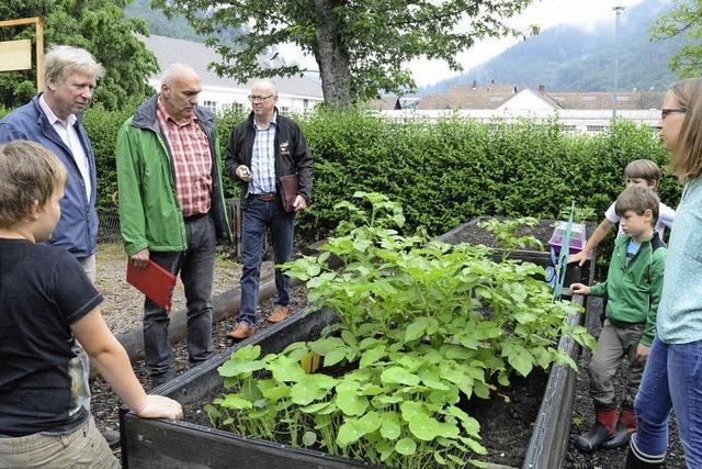 Schüler beweisen ihren grünen Daumen im Garten