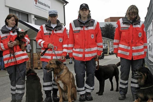 Bären-Hospital und Rettungshunde