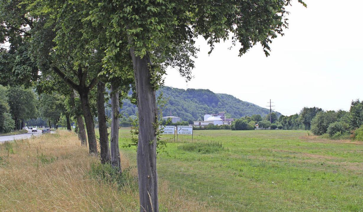 Bald ist Schluss mit der Grünidylle: S...s zwischen Wiese und B317 geschaffen.   | Foto: Hermann Jacob