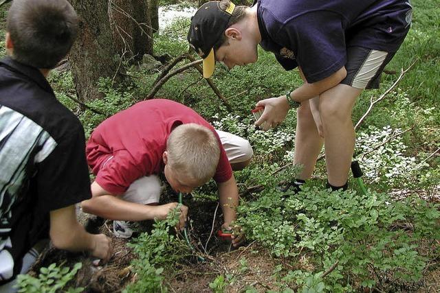 Tiere unter der Lupe - Kleintierjagd - für Menschen ab 8 Jahren in Feldberg