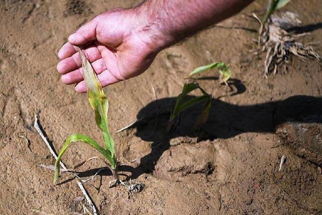 Hilfe nach den Unwettern: 7 Millionen Euro für Bauern