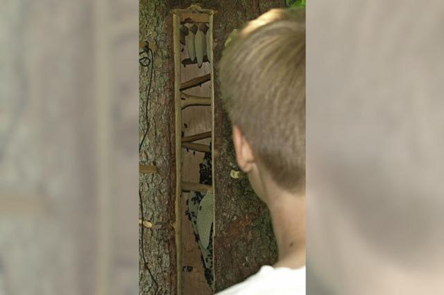 Vom Baumstamm zu Bienenkästen