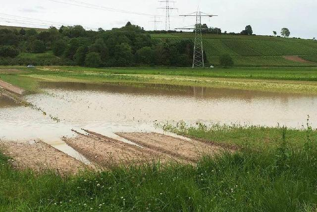 Dauerregen plagt südbadische Landwirte und Winzer