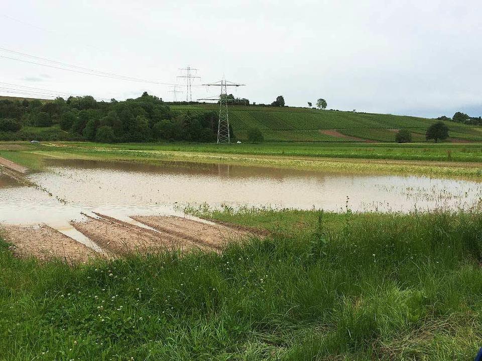 Viele Gemüsefelder haben sich in Teich...ndelt – wie hier bei Fischingen.  | Foto: Jutta Schütz