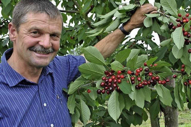 Hagel und Regel machen den Kirschen zu schaffen - Obstbauern hoffen auf Wetterwechsel
