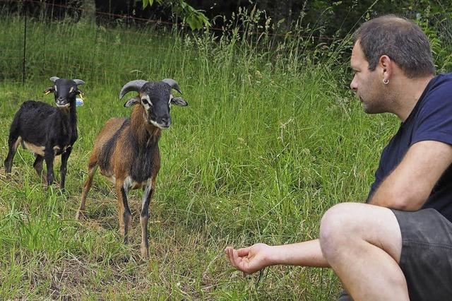 Er schert sich um seine Schafe