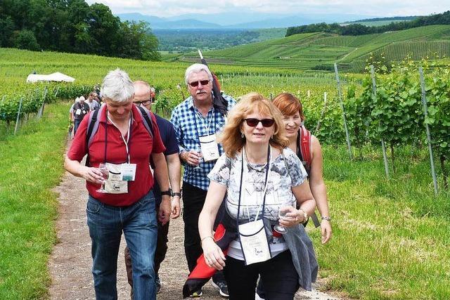 1800 Teilnehmer bei der kulinarischen Weinwanderung in Oberrotweil