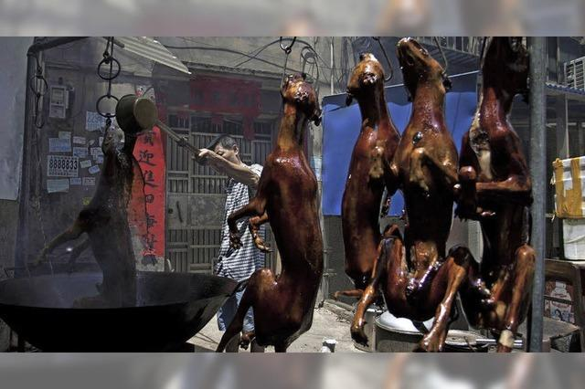 Immer mehr Kritik an Hundefleisch