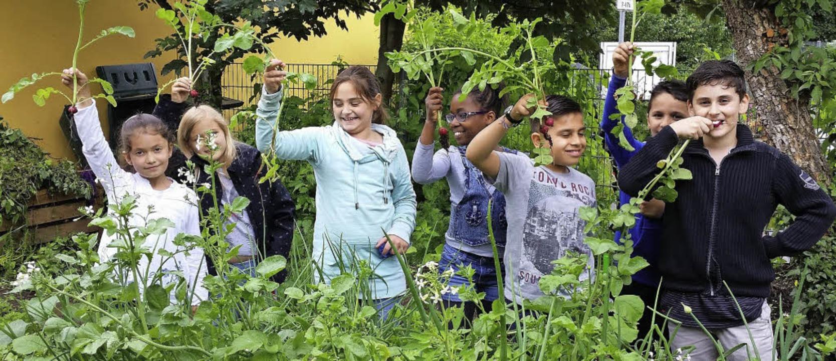 <BZ-FotoAnlauf>Junges Gemüse </BZ-Foto...adieschen im Garten der  Tullaschule.   | Foto: Schule