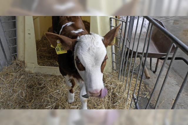 Kühe, Ziegen, Ferienzimmer
