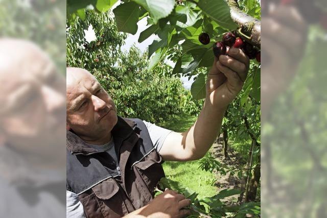 Landwirte beklagen Ernteausfälle