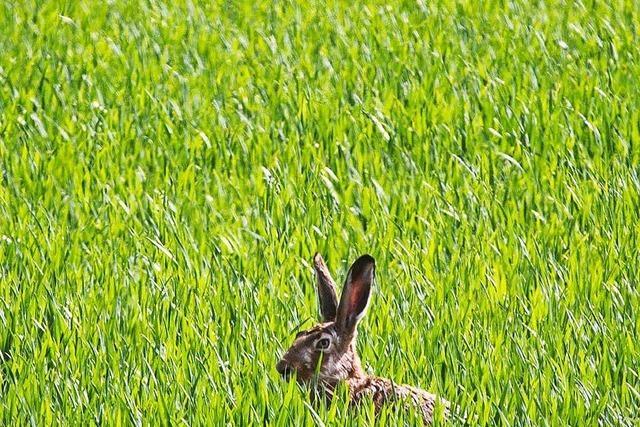 Warum bringt der Hase die Eier?
