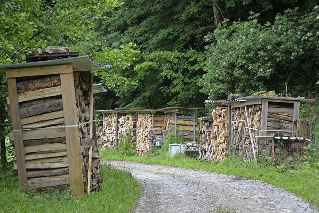 Zehn Kilometer neue Fahrwege im Wald