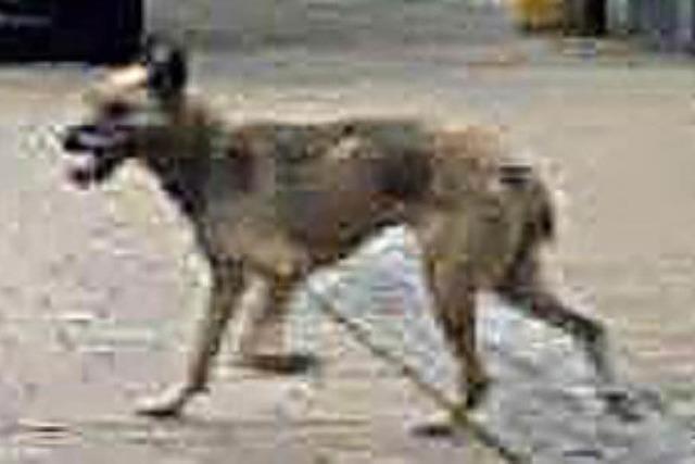 Dieses Hundeleben geht ganz vielen zu Herzen