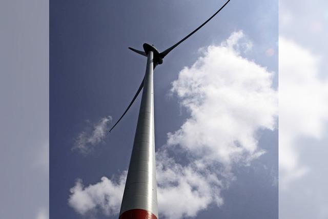 Rotmilan legt Windpark lahm
