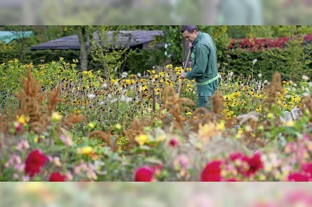 Blumen werden teurer