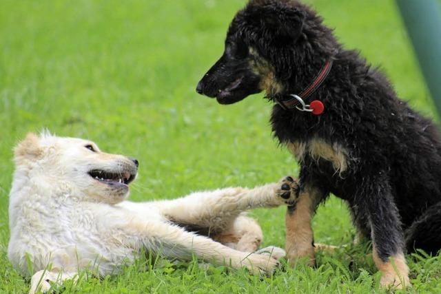 Hunde sind tolle Sport- und Spielkollegen