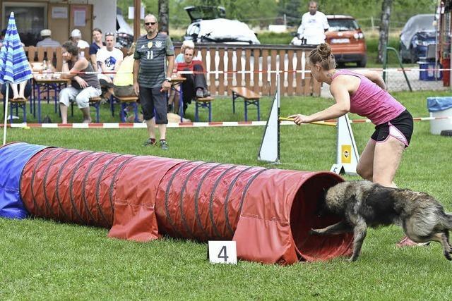 Bewegender Spaß für Hund und Mensch