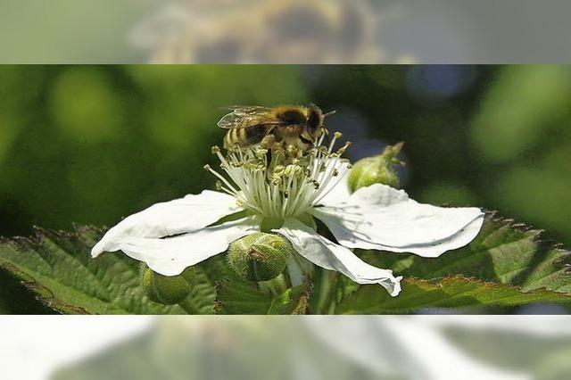 Was man jetzt im Garten tun muß, damit die Blüten bleiben