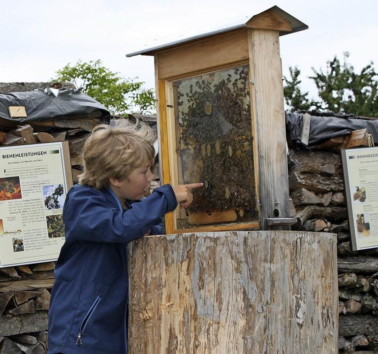 Keine Berührungsängste mit Bienen habe...sucher beim Tag der offenen Gartentür.  | Foto: Martha Weishaar