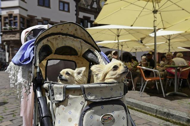 Hundedamen mit Chauffeur