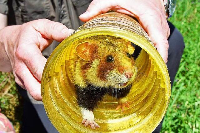 Existenz der Mannheimer Hamster muss gesichert werden