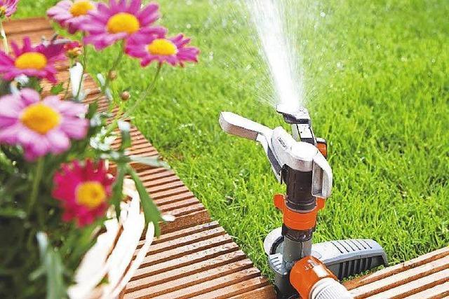 4 Tipps vom Profi für die Rasenpflege im Sommer