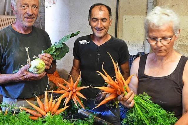 Regen reißt Lücken ins Gemüsesortiment