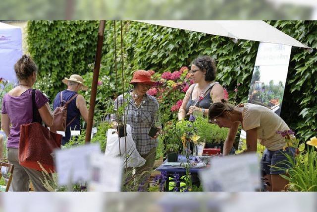 50 Betriebe stellen sich bei Biogartenmesse in Ebnet vor
