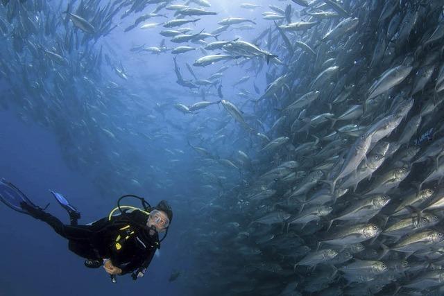Familie Cousteau setzt sich für Umwelt- und Naturschutz ein