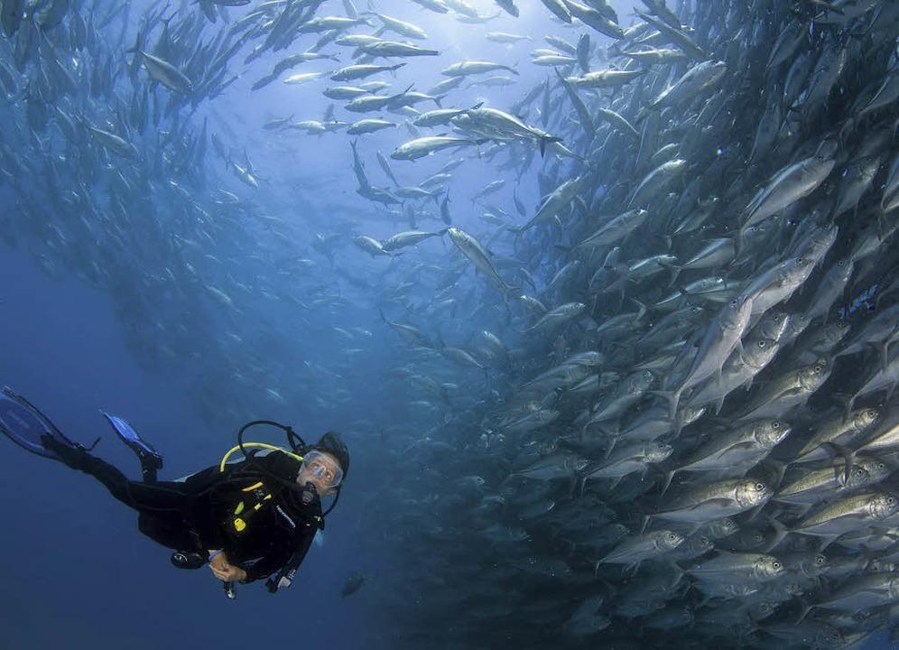 Den Menschen die Schönheit der Unterwa... ist das Anliegen von Céline Cousteau   | Foto: Capkin van Alphen