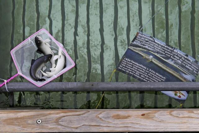 Das Naturbad Riehen zeigt eine Ausstellung zum Thema Artenvielfalt