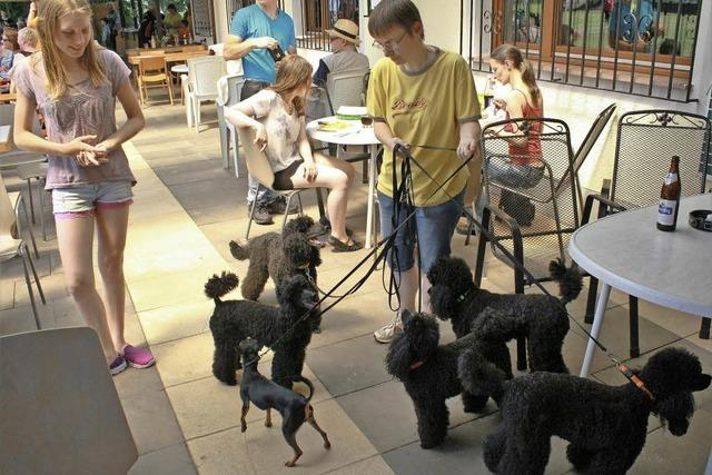 Hundstage in Herbolzheim