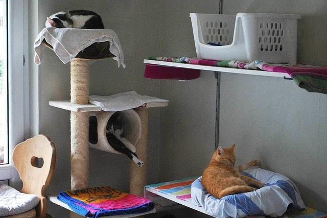 Das Tierheim in Hauingen hat Geburtstag