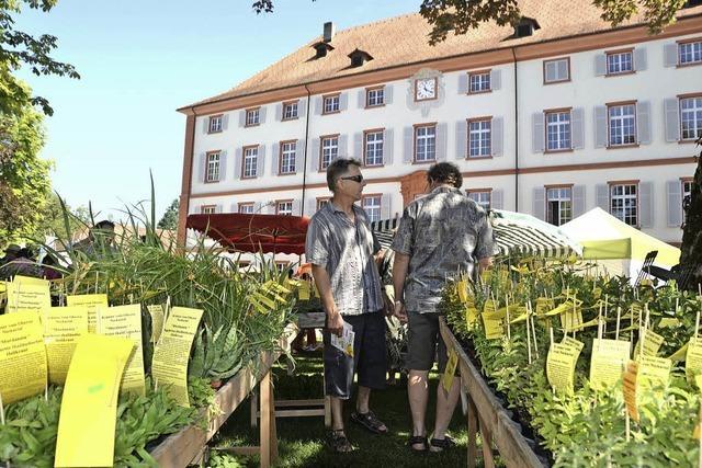 Die Gartenmesse DiGa auf Schloss Beuggen mit Seerosenschau
