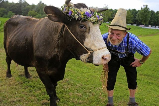 Abschluss mit Kuh