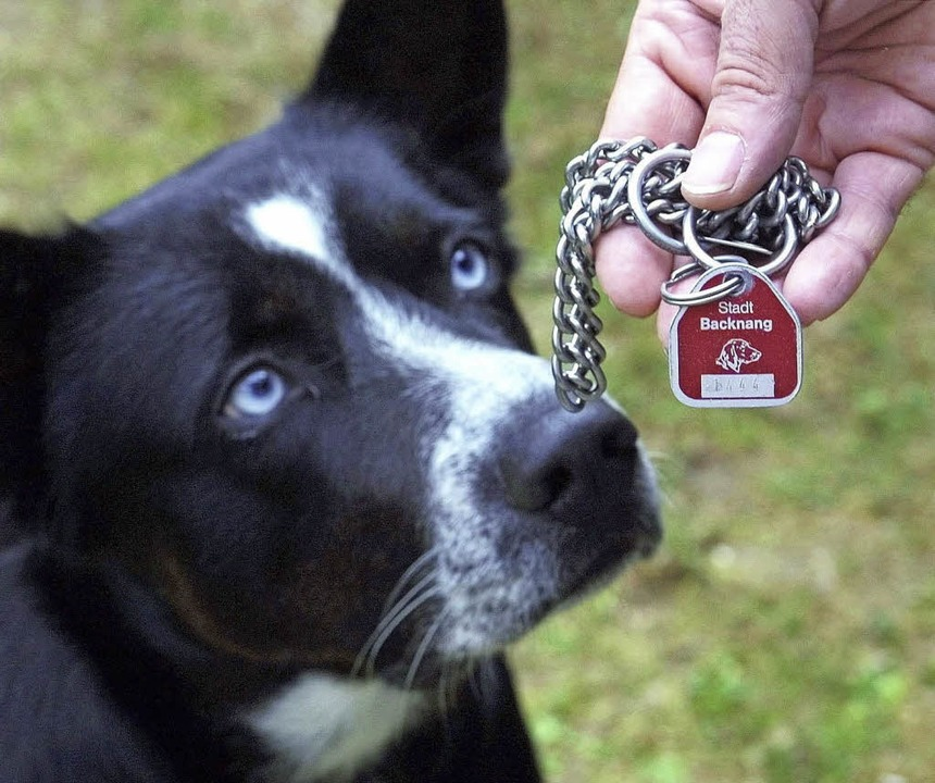 <ppp> die Hundesteuer <ppp></ppp></ppp>  | Foto: dpa