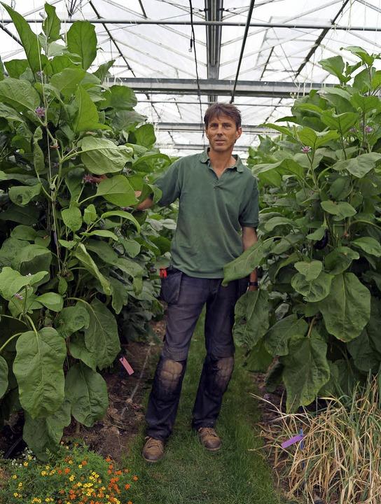 Neun Gemüsesorten haben mittlerweile d...reimeister Richard Specht entwickelt.     Foto: Silke Hartenstein