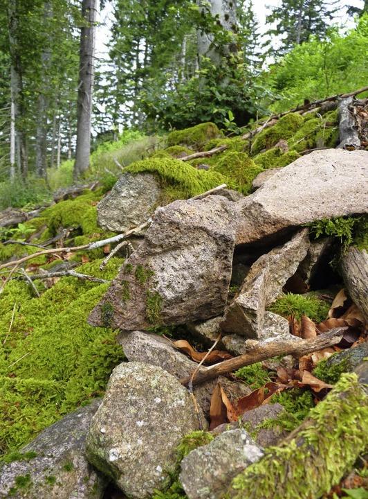 Für den Laien nur Steine im Wald, doch...Ringwalls am Schlossboden in Neuenweg.  | Foto: Sattelberger