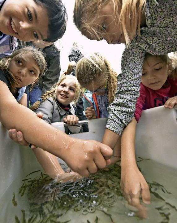 Grundschulkinder wünschten den Fischen...ese in die Freiheit entlassen wurden.   | Foto: Michael Bamberger